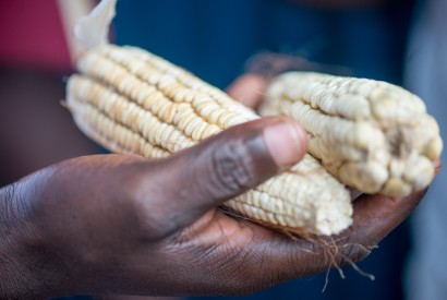 Maize is a staple crop in Rwanda. It can be dried and stored with little product loss. Crystaline Randazzo for Bread for the World.