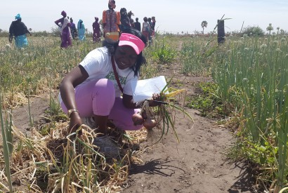 Faustine Wabwire of Bread for the World Institute joins young farmers in Kaolack, Senegal. Photo courtesy of Faustine Wabwire/Bread for the World.