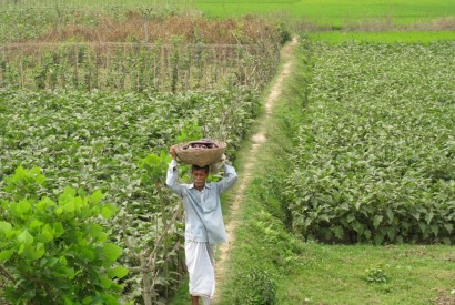 A Bangladesh farmer. Todd Post/Bread for the World Institute.