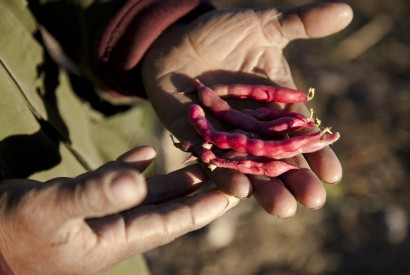 Mexican red beans. Laura Elizabeth Pohl/Bread for the World.