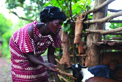 Jane Sebbi tends to her goats in Kamuli, Uganda. Laura Elizabeth Pohl/Bread for the World.