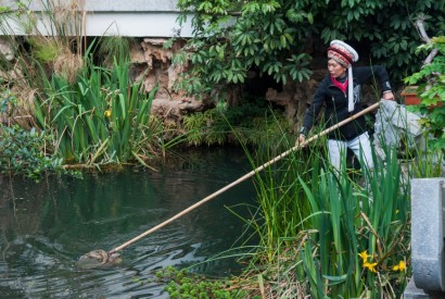 Woman with traditional Yunnan head gear, cleaning a fish pond with a brailer in Dali, Yunnan, China. Wikimedia Commons.