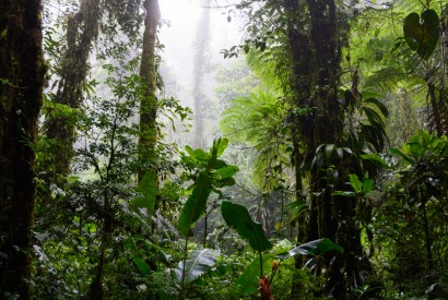 Santa Elena Cloud Forest Reserve, Costa Rica. Wikimedia Commons.