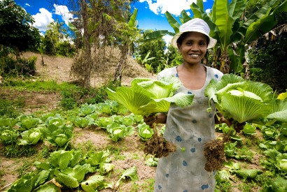 Chinese cabbage is planted by members of a local farmers' organization in Vavatenina district, Madagascar. IFAD/R. Ramasomanana.
