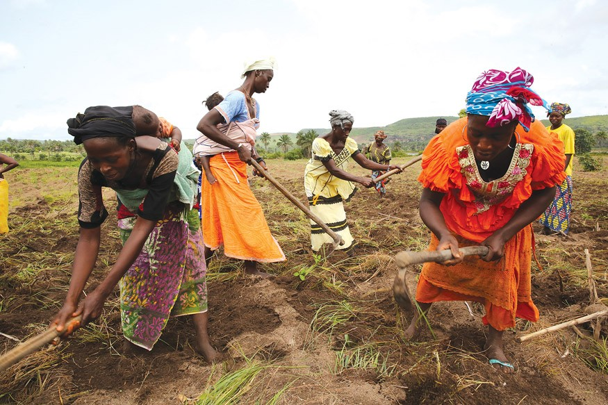 West African (Guinea) farmers. Dominic Chavez/World Bank
