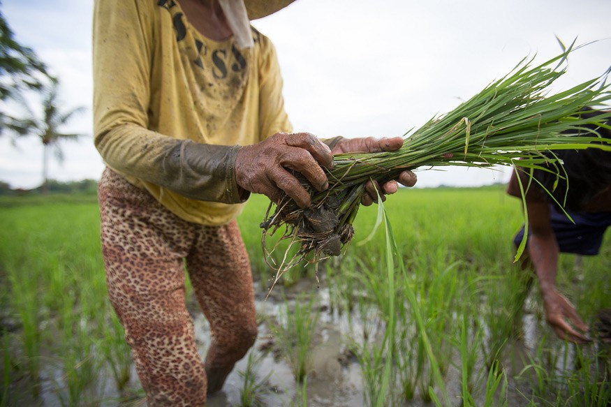 Climate change field school programs in the Philippines are part of the overall effort to educate and prepare small holder farmers on how to adapt and mitigate negative effects of projected weather changes. Photo: Joe Molieri / Bread for the World