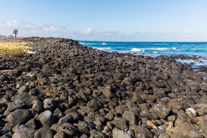 Coast of Santa Cruz Island, Galapagos Island, Ecuador. Wikimedia Commons.