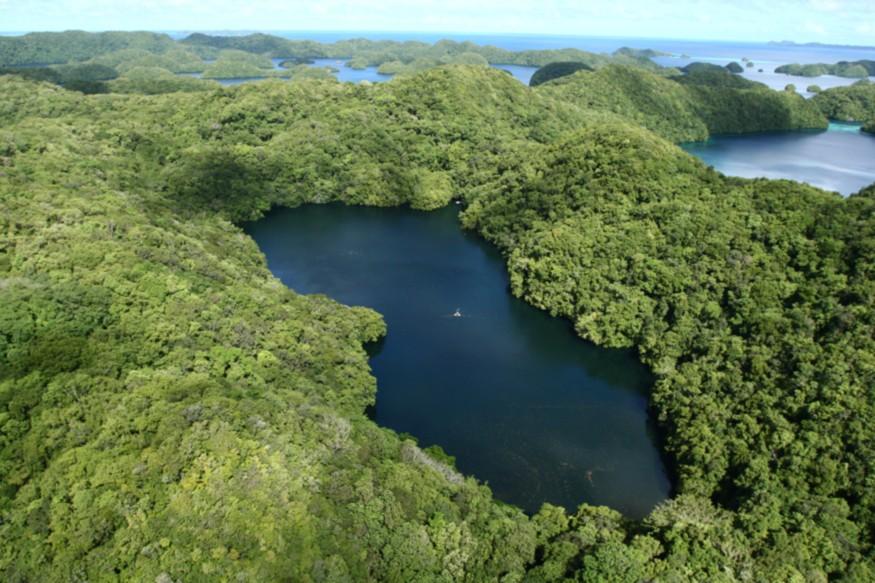 Photo caption: Jellyfish Lake on Eil Malk Island, Palau. LuxTonnerre/Wikimedia Commons