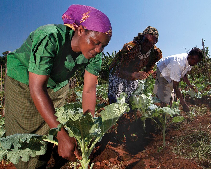 Women farmers from Kenya. Photo by Jim Stipe.