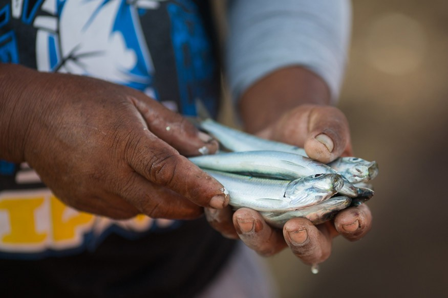 USAID's ECOFISH program seeks to educate fisherman on sustainable fishing methods such as hook and line, as well as the dangers of overfishing and destructive fishing methods. Photo: USAID